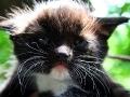 Юный котик.