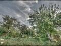 Малоархангельские яблони