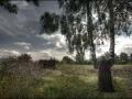 Малоархангельский пейзаж с берёзой
