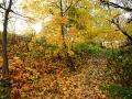Дорожка к родникам, осень