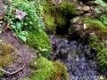 Вода вытекает из глубины отложений девонских известняков