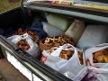 Багажник грибов