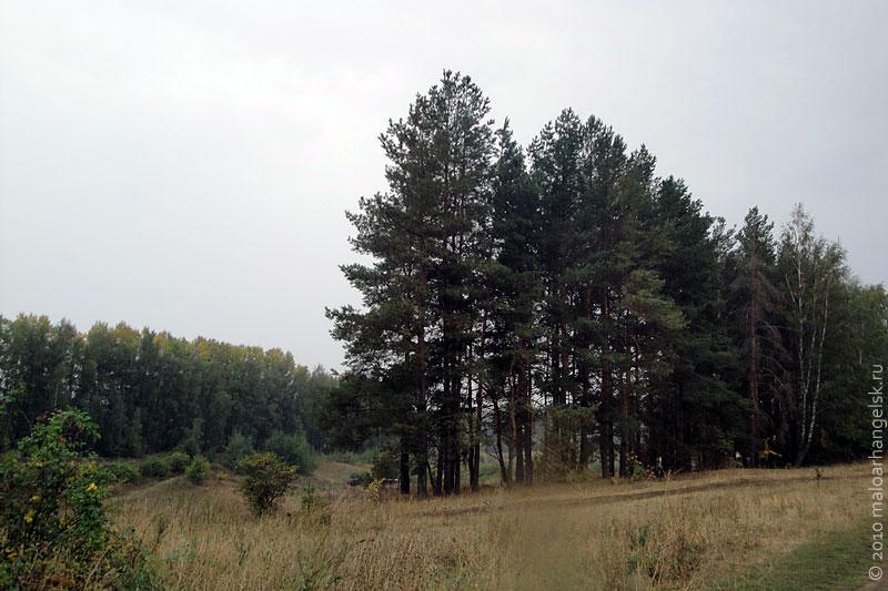 derevya-03
