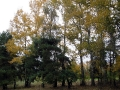derevya-02
