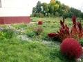 В Совхозской школе успешно применяют ландшафтный дизайн.