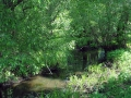 Течение ручья тихое и спокойное.