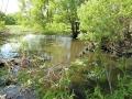 В некоторых местах ручей выглядит, как река.
