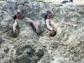 Песка на пляже порядком: хватит, чтобы зарыться в него с головой.