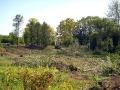 Уборка старых деревьев из парка