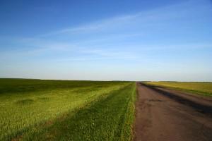 Поле, дорога. Снято где-то между Малоархангельском и Глазуновкой. Нестостоявшееся владение Фрица.