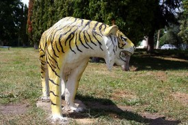 Тигр летом