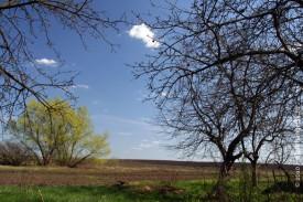 Вид от дома: яблоня. Скоро она будет цвести, почки уже набухли.