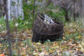 Корзинки в осеннем саду