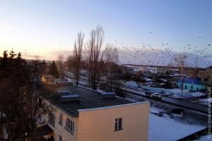 Весна 2011. Птицы возвращаются в Малоархангельск.
