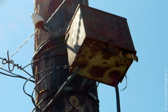 Птица Радиолярия (Электрофорез?).