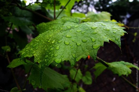 10 июня 2011 года в Малоархангельске был дождь.