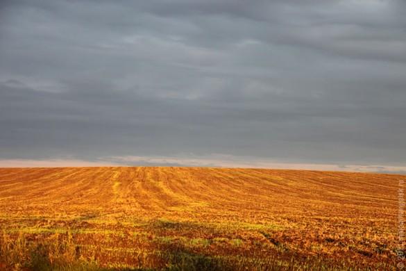 Август. Сжатое поле.