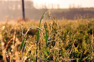 Роса на траве.