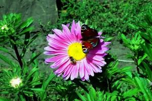 Бабочка на цветке.