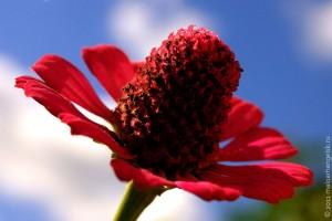 Осенний цветок ко дню рождения Малоархангельска.