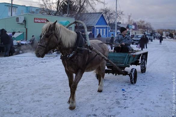 Лошадь на предновогодней ярмарке в Малоархангельске.