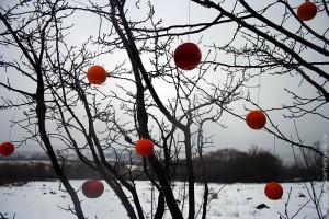 Апельсины на сливе.
