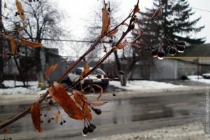 Рождественский дождь, 2012 год.