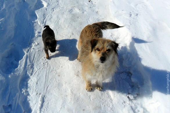 Зимняя собака от Игоря.