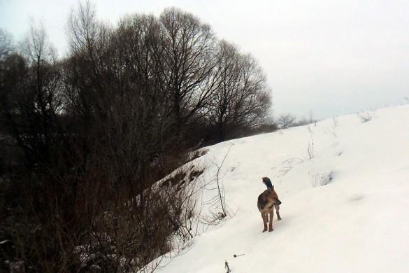 Собака от Игоря на склоне.