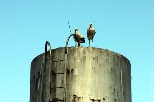 Аисты на водонапорной башне, село Ивань.