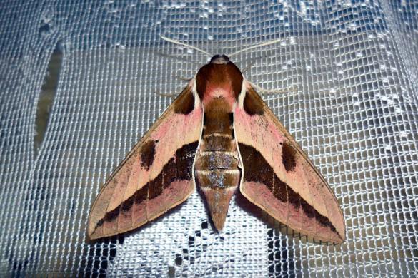 Ночная бабочка — 2013.