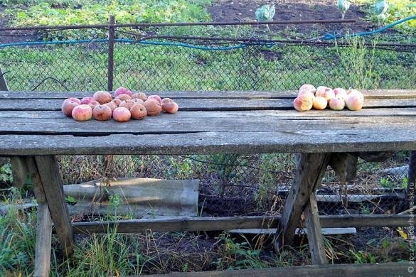 Алисовские яблоки.
