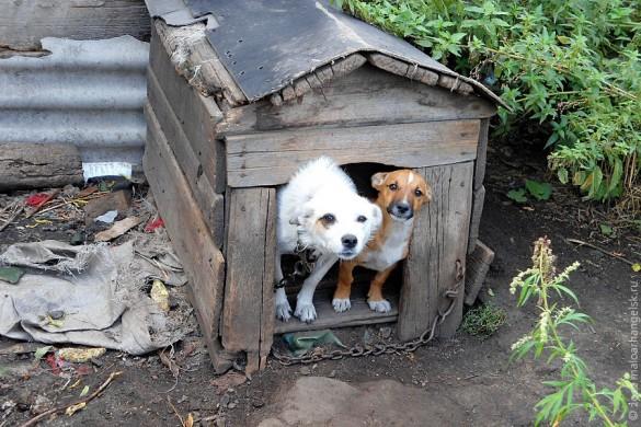 Собака Люська и её сыночек храбро лают из будки.