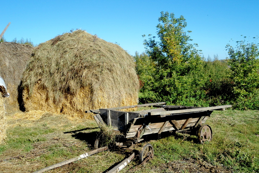 Арба для сена