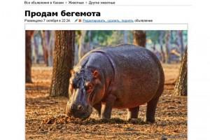 Объявление о продаже бегемота в Казани.