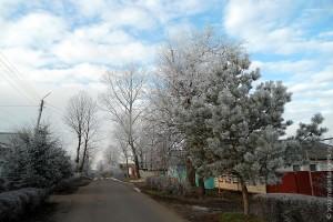 Малоархангельск в декабре 2012 года. Небо, девушка, сосна.