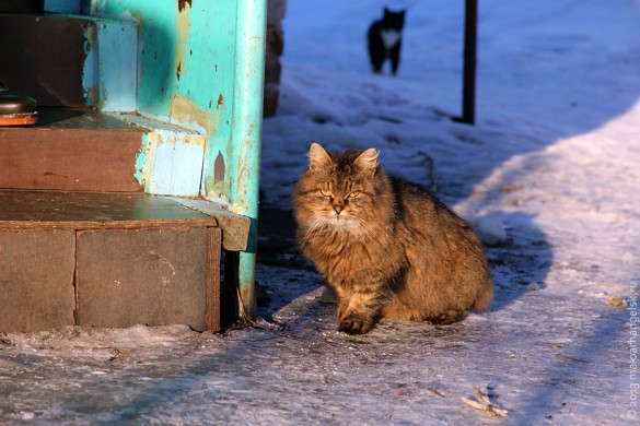 За порядком присматривают сразу два больших красивых кота.