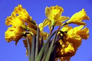 Цветы к 8 марта.