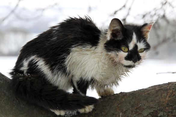 Зимний котик Мурлен.