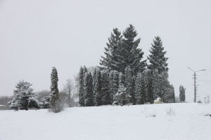 Пушкинский парк зимой.