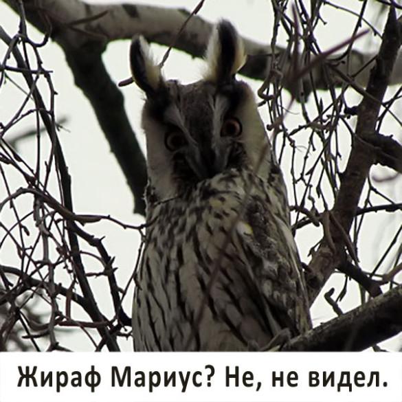 Совушка в парке Малоархангельска.