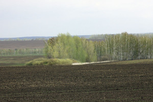 Засеянное поле.