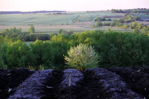 Пейзаж с цветущей яблоней.