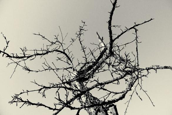 Высохшее дерево на берегу мишковского пруда.