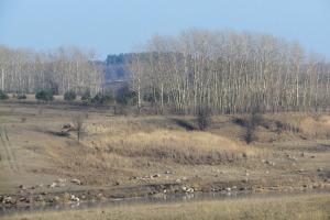 Пенькозаводский пруд.