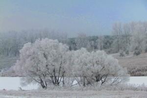 Пейзаж со снежными кустами.