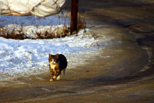 Кошка бежит по дорожке.