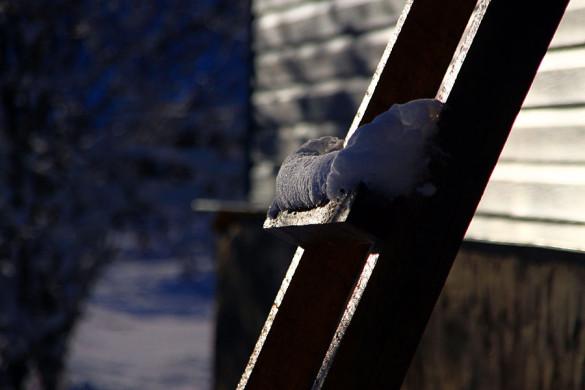 Снег на лестнице.