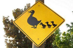 Дорожный знак Утки на дороге.