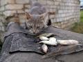 Кошка, проживающая рядом с пятиэтажкой.